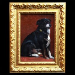 Portrait Of Dog With Collar
