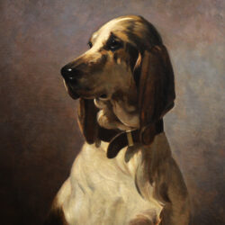 French hunting dog Braque breed