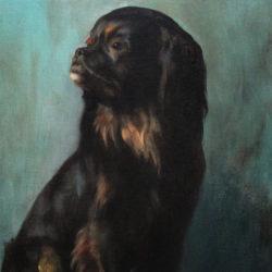 portrait of a Pekingese dog