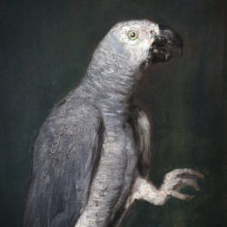portrait oil on cardboard of a grey parrot