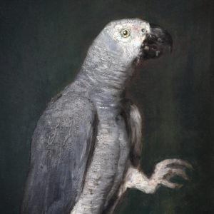 portrait oil on cardboard of a grey parrot