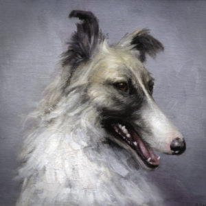 Portrait Russian Borzoi dog