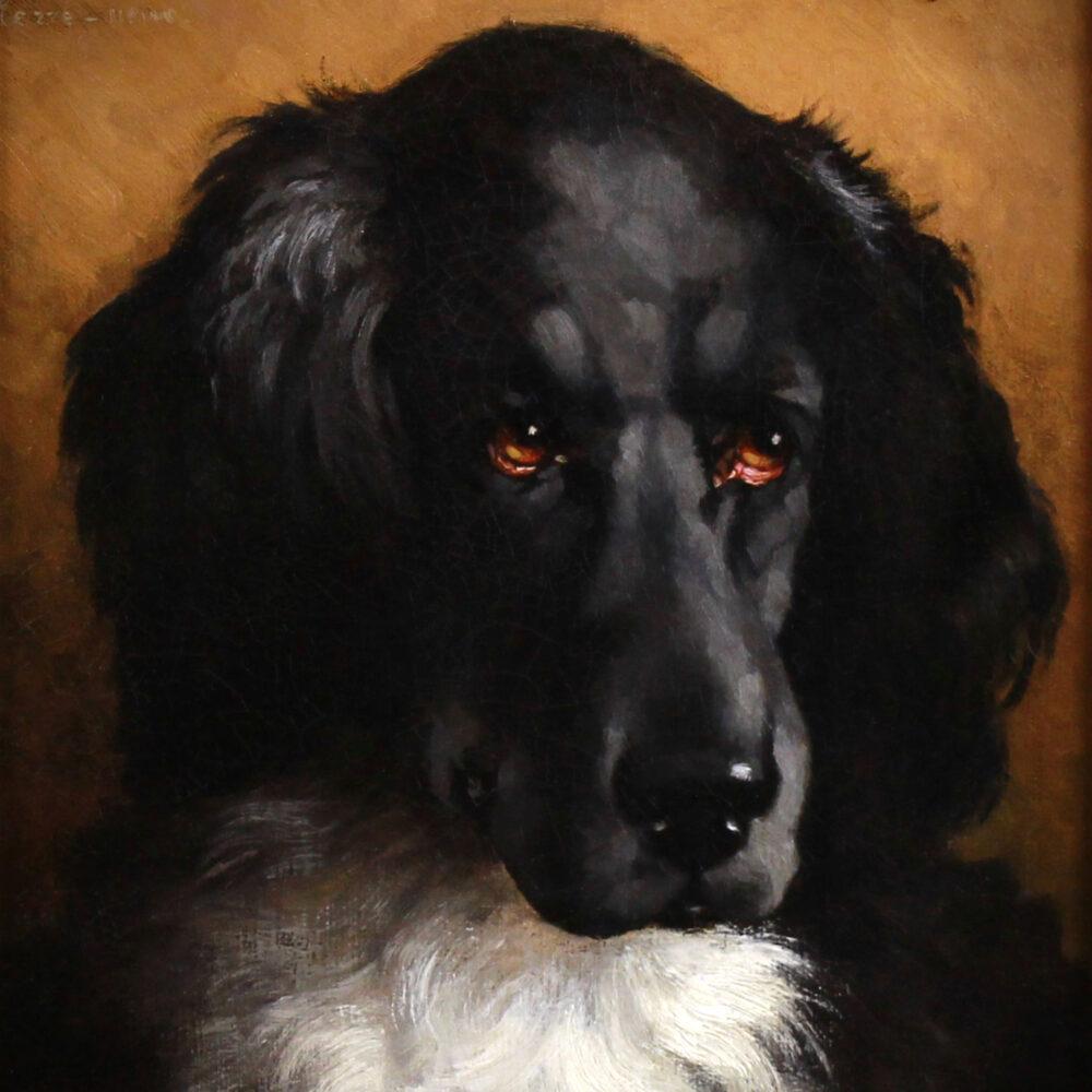 Portrait terre neuve E. Ollivier 7