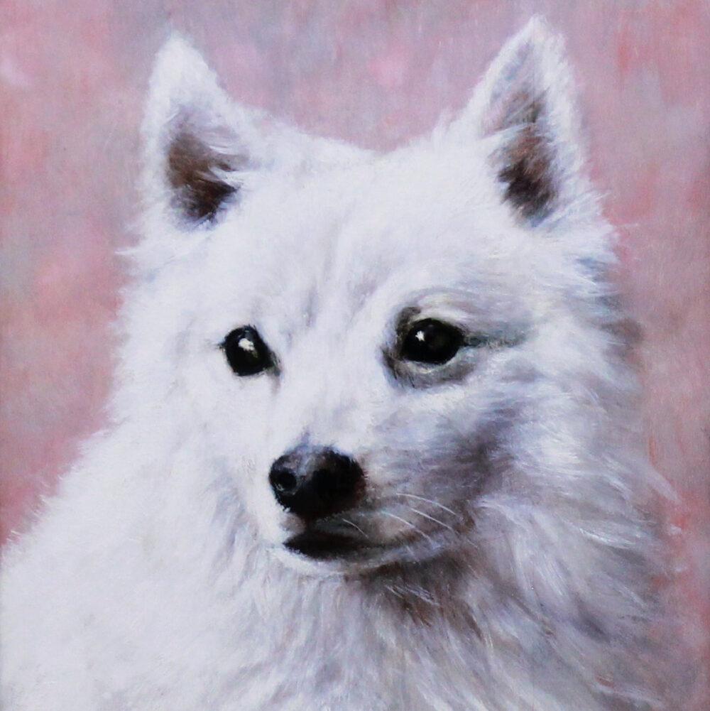 Oil on panel portrait of an American Eskimo dog 20th